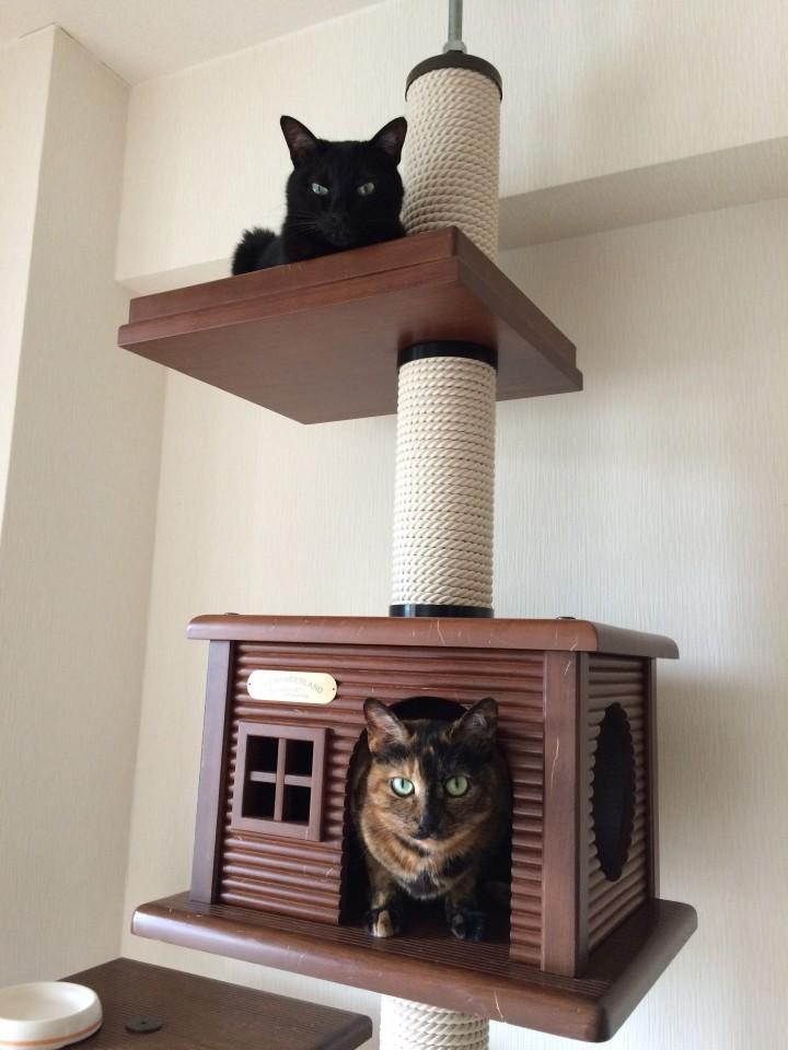 タブレットと猫の居る生活のススメ