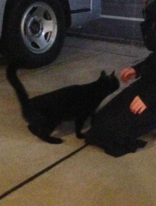 私より女の子に寄っていくゲス猫