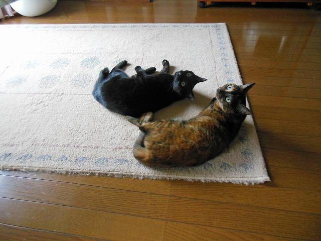 猫、未知と遭遇?!