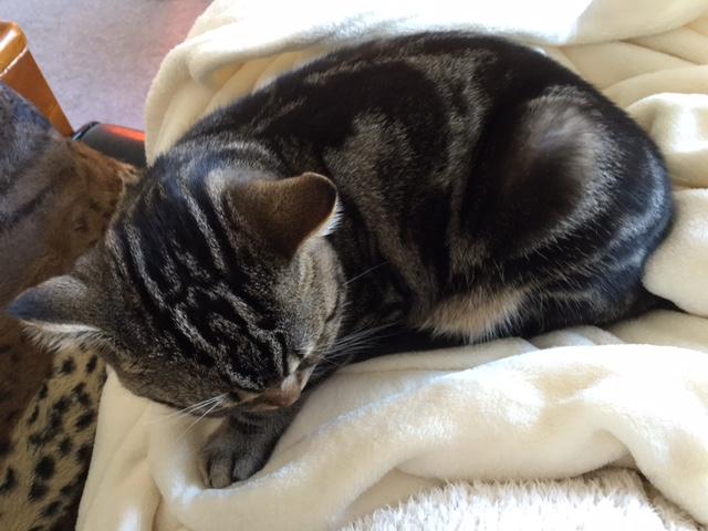 猫と暮らすと生活が一変!?忙しい人ほど猫との暮らしをおすすめしたい件 その3
