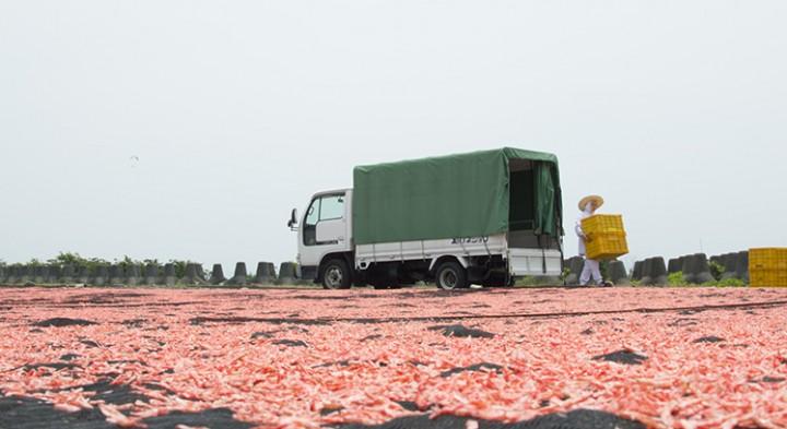 初夏の風物詩!河川敷に現れたピンクの絨毯の正体とは?