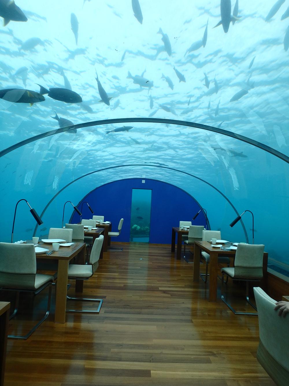 海の中にあるレストラン。水族館のような雰囲気の中で食事ができます。 頭上を亀が優雅に泳いでいて、非日常感を味わえました。