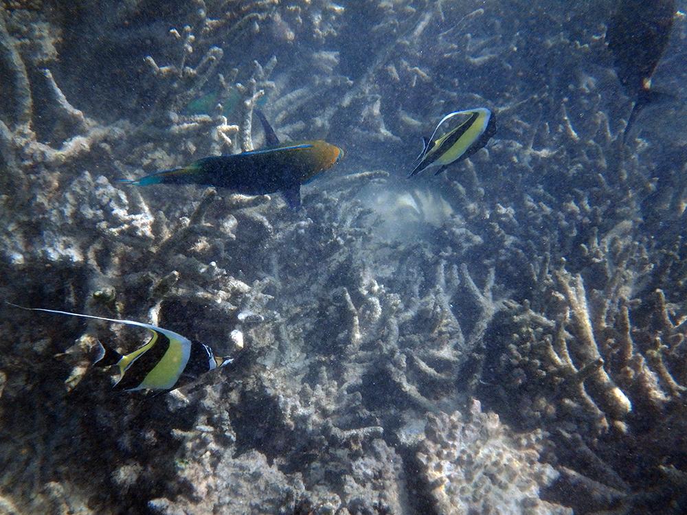 美しいハウスリーフに囲まれており、シュノーケリングに最適。 色とりどりの熱帯魚たちがたくさん泳いでいました。