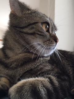 猫と暮らすと生活が一変!?忙しい人ほど猫との暮らしをおすすめしたい件 その4